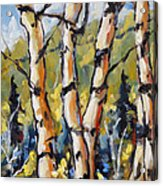 Birches Aglow By Prankearts Acrylic Print