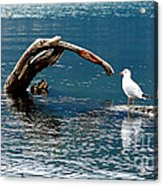 Bird And Log Acrylic Print by Barry Shaffer