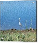 Bird At Lake Varner Acrylic Print