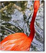 Bird Bath Acrylic Print