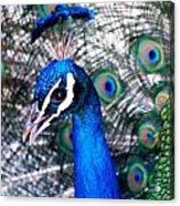 Bird Beauty Acrylic Print