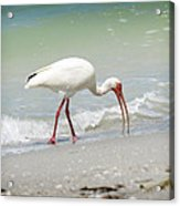 Bird Breakfast Acrylic Print
