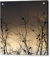 Bird Cove Acrylic Print