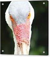 Bird Eyes Acrylic Print