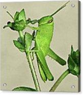 Bird Grasshopper Nymph Acrylic Print