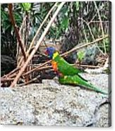 Bird In The Bush Acrylic Print