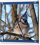 Bird Of Blue Acrylic Print