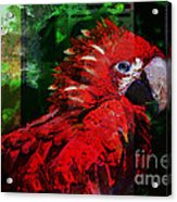 Bird Of Exotic Color Acrylic Print by Christine Mayfield