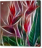 Bird Of Paradise Fractal Acrylic Print