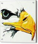 Bird Of Prey  Eagle Acrylic Print