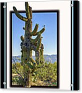 Bird On Cactus Acrylic Print
