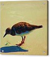 Bird On Daytona Beach Acrylic Print