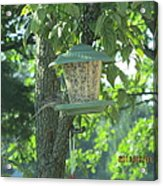 Bird On Full Feeder Acrylic Print