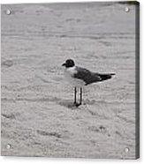 Bird On The Beach 2 Acrylic Print