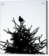 Bird Silhouette  Acrylic Print