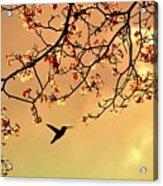 Bird Singing In The Morning Sky Acrylic Print