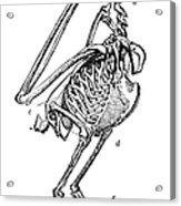 Bird Skeleton Acrylic Print