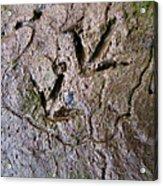 Bird Tracks Acrylic Print