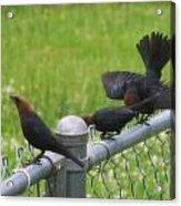 Bird Trio Acrylic Print