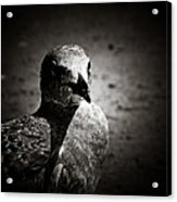 Bird's Eye View Acrylic Print