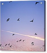 Birds Flying At Sunset Acrylic Print