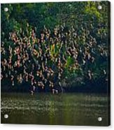 Birds In Flight Acrylic Print