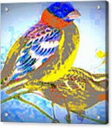 Birds Of Color Acrylic Print