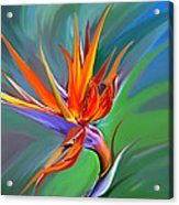 Birds Of Paradise 1 Acrylic Print