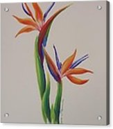 Birds Of Paradise -in Love Acrylic Print