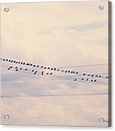 Birds On A Wire Pink And Blue Acrylic Print