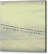 Birds On A Wire Polaroid Acrylic Print