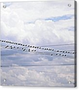 Birds On A Wire Pushed Acrylic Print