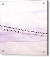 Birds On A Wire Red Tint Acrylic Print