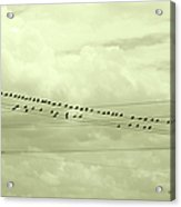 Birds On A Wire Tinted Acrylic Print