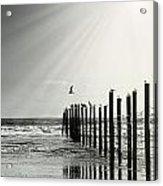 Birds On Outer Banks Acrylic Print