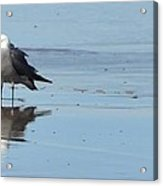 Birds On The Beach Acrylic Print