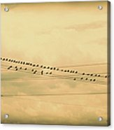 Birds On Wires Back In Time Acrylic Print