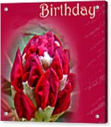 Birthday Card - Red Azalea Buds Acrylic Print