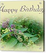 Birthday Greeting Card - American Beautyberry Shrub Acrylic Print