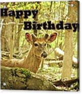 Birthday Greeting Card - Whitetail Deer Buck In Velvet Acrylic Print