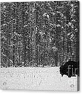 Bison In Snow Mosaic Acrylic Print