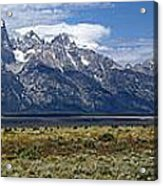 Bisons Grazing Under The Grand Tetons Acrylic Print
