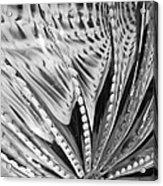 Black - White Acrylic Print by Jan Canavan