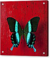 Black And Blue Butterfly  Acrylic Print