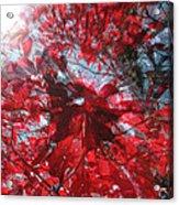 Black And Red Crescendo Acrylic Print