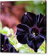 Black And Velvety Acrylic Print
