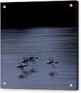 Black And White - Merganser Fliers Acrylic Print