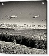 Black And White Above The Vines  Acrylic Print by Joshua House