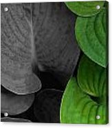 Black And White And Green Leaves Acrylic Print