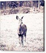 Black And White Deer Acrylic Print